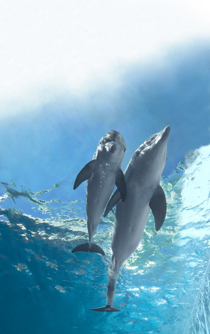 """See Winter the dolphin from """"Dolphin Tale"""" at Clearwater ...  
